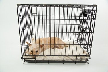 Hond, Cage, Alleen